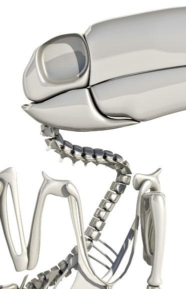 Toucan Skeleton 3d